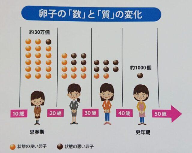 卵子の数と質の変化